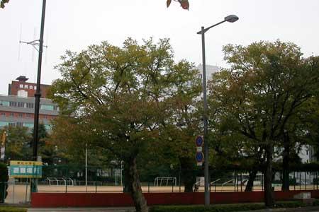 http://www.genkipolitan.com/img_kokoro/j_school.jpg