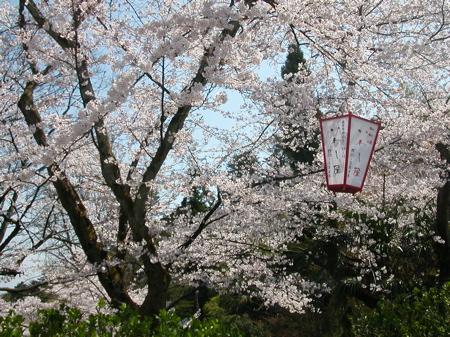 http://www.genkipolitan.com/img_kokoro/yamazakura.jpg